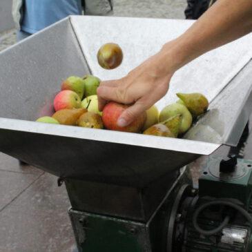 Von Äpfel, Birnen, Kürbis und Bete..
